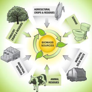 انرژی زیست توده